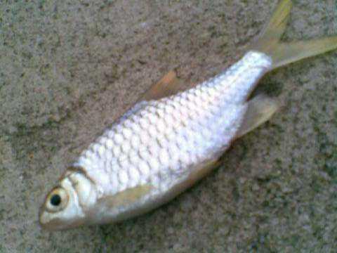 ikan+006.jpg