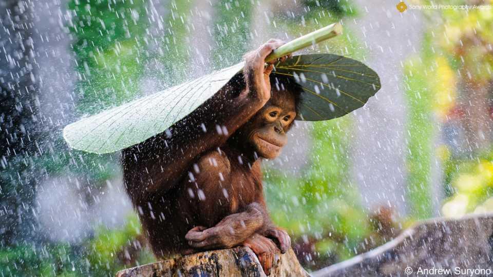 indonesia_monkey_wpo.jpg