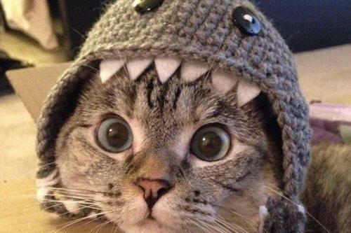 kucing2-500x333.jpg