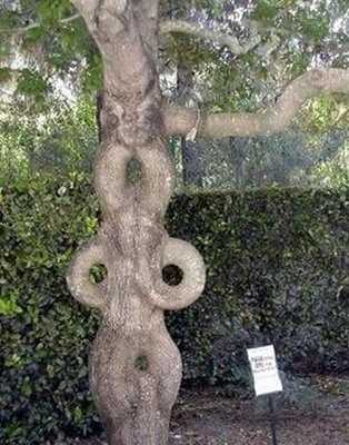 weird-trees-3.jpg