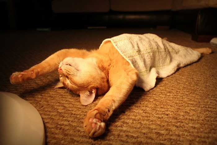 funny-sleeping-cat-positions-coverimage.jpg