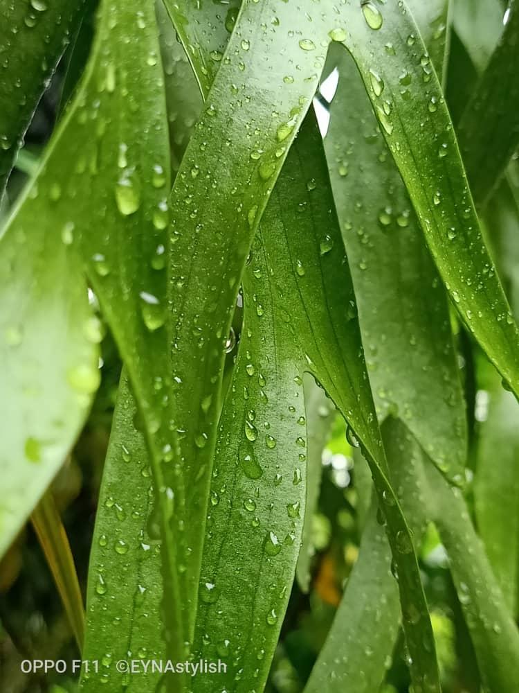 sesudah hujan 1.jpg