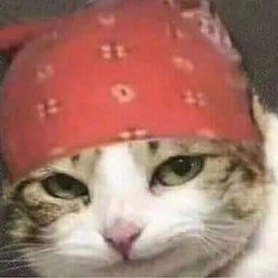 kucing meme.jpg