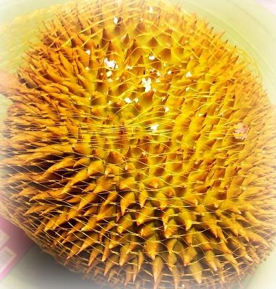 duriannn.jpg