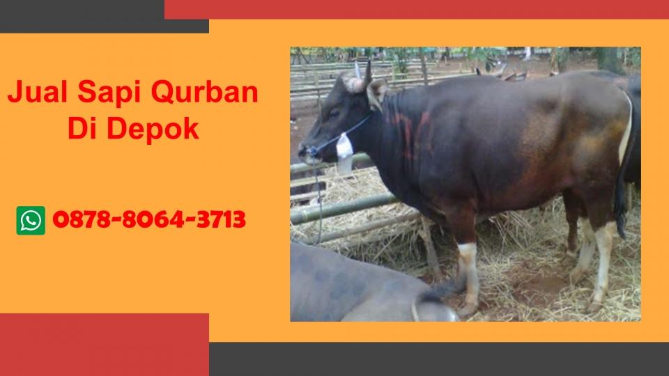 WA 0878-8064-3713Bisnis Sapi Kurban Di Kawasan  Bedahan Depok.JPG