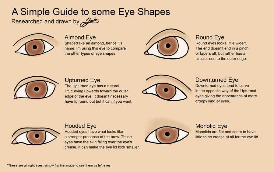 eye_shapes_reference_by_inokithefox_dcloamj-fullview.jpg