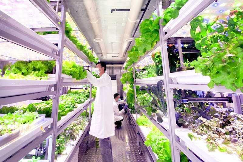 01_the_vegetable_co.jpg