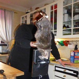 Tikus Gergasi Dalam Rumah