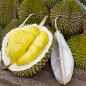 Tahu Tak, Macam Mana Durian Dihasilkan atau Membiak?