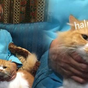 Reaksi Kucing PM Najib Jadi Viral, Netizen Buat Meme Melucukan
