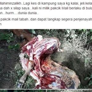 Tak Takut Dosa Ke? Buat Kerja Terkutuk, Lapah Lembu Orang Ikut Suka Hati!