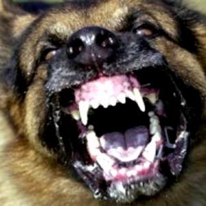 Selepas Melaka, Jangkitan Anjing Gila Dikesan Di Kuala Sepetang,Taiping