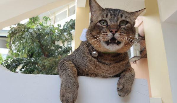 Rajin Sangat Pergi Kuliah Labun Si Kucing Dah Diberi Kad