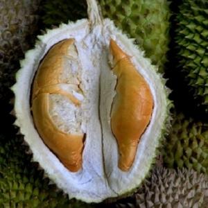 Bukan Sahaja Menggiurkan, Durian Turut Mampu Rangsang Syahwat Lelaki