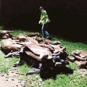 Sungai Tercemar Dengan Tulang Babi..