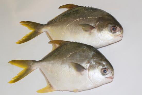 Kamus Ikan Bolehlah Tunjuk Handal Depan Mak Mertua Nanti Makanan Resipi Explorasa Forum Cari Infonet