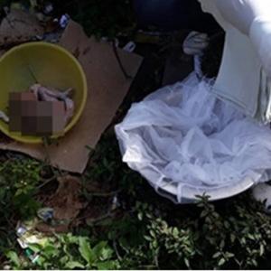 Bayi 9 Bulan Dibunuh Kejam, Anggota Badan & Kemaluan Dipotong