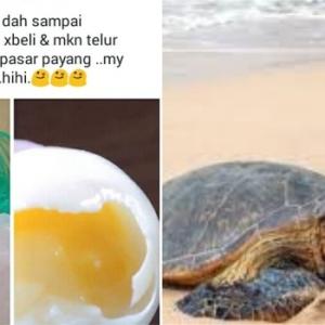 Rugi Tak Beli Dan Makan Telur Penyu Jika Ke Pasar Payang! - Status Wanita Ini Undang Amarah