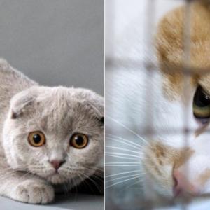 Ustaz Dah Cakap Jangan Jual Beli Kucing, Sekarang Baru Nak Percaya?