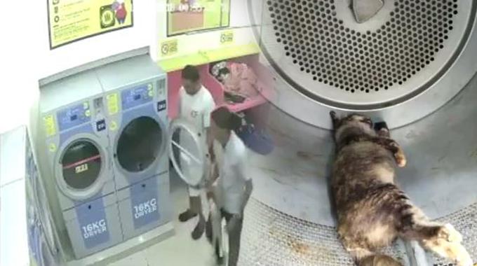 Kucing Betina Keluar Darah Bunuh Kucing Bunting Dalam