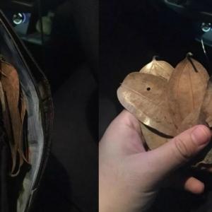 Pengalaman Mistik Pemandu Grab, Duit Tambang RM8 Bertukar Jadi Daun Kering