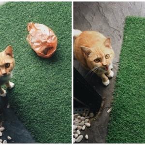 Kucing Jalanan Buat Surprise, Bagi Hadiah Nasi Bungkus Kepada Tuan Rumah