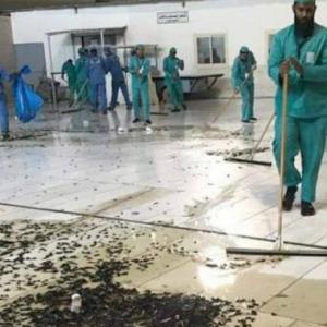 Penduduk Bingung, Kota Mekah Dan Masjidil Haram 'Diserang' Ribuan Cengkerik
