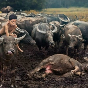 Mowgli Malaysia, Gambar Budak 14 Tahun Mesra Dengan Haiwan Tular