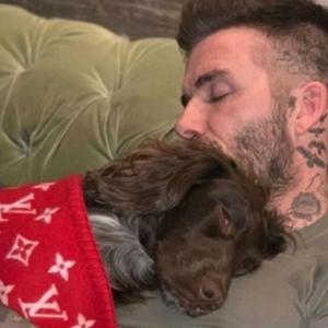 David Beckham Dikecam Kerana Selimut Anjing Bernilai RM26 Ribu. Tak Membazir Ke?