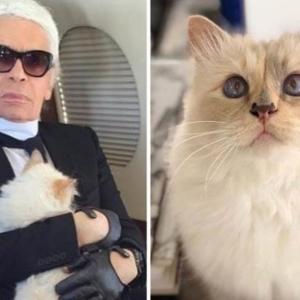 Mendiang Karl Lagerfeld Wariskan Jutaan Dollar Kepada Kucing Dikatakan Jelmaan Ibunya
