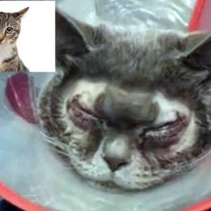 Kerana Kucing Hodoh, Wanita Sanggup Belanja RM6000 Ringgit Untuk Pembedahan Plastik
