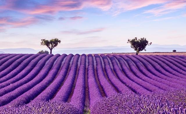 10 Ladang Bunga Yang Tercantik Di Dunia Yang Mana Satu Pikat Hati Anda Gaya Hidup Cari Infonet