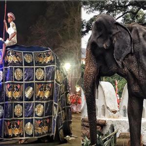 Tikiri Akhirnya Direhatkan Dari Festival Selepas Gambar Kurus Keringnya Viral