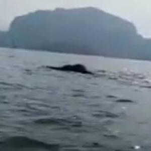 """""""Comelnya La Hai"""" - Gajah Berenang Di Tasik Kenyir"""