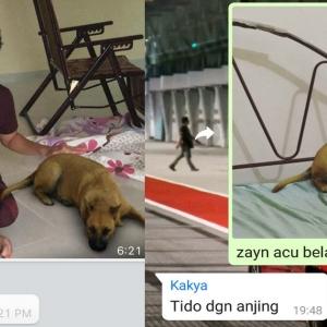 Kelakar Habis! Gelagat Ahli Keluarga Kena 'Prank' Dengan Filter Anjing Mencuit Hati