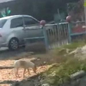 Jijik! Udang Kering Dibiar Dijilat, Dipijak Anjing Sesukanya