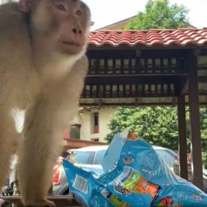 """Ambil Keropok!"" - Video Mencuit Hati Gadis Diganggu Monyet Ini Dapat Perhatian Yuna Zarai"