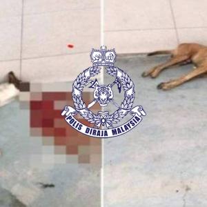 Tembak 5 Anjing Sebab Dendam Anak Pernah Hampir Digigit