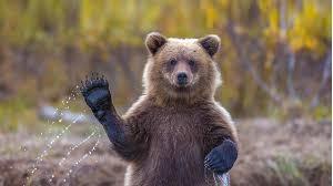 Bedah Wajah Jadi Beruang? Ketua Polis Negara Dedah Kenapa Jho Low Sukar Dijejak