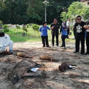 Norhizam Hassan Baktee Diiktiraf 'Juara Penembak Babi', Sidang DUN Melaka Kecoh!