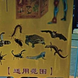 Daging Kelawar Dah Mula Dijual Semula Di China?