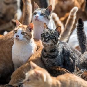 Rakam TikTok Siat Kulit Kucing Hidup-Hidup, Gantung Anjing