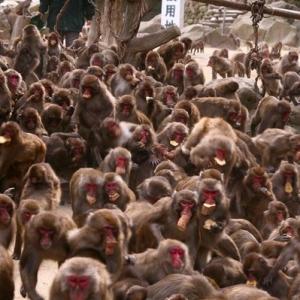 Dinding Runtuh Digoncang Monyet, Ibu Dan Empat Anak Maut Dihempap