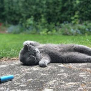 Kucing  Mati Dirogol. Angkara Manusia Atau Haiwan Lain?