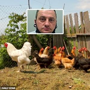 Pekerja Pasar Raya Rogol 15 Ekor Ayam Dan Anjing Peliharaannya Sehingga Mati