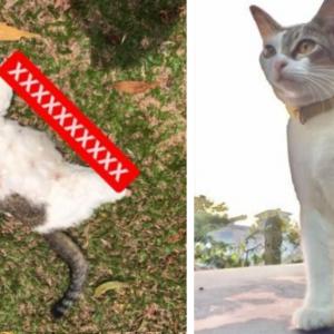 Kejam! 1 Keluarga Menggigil Kucing Peliharaan Mati Dipotong 4 Kaki