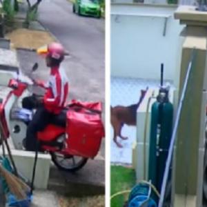 Pos Malaysia Siasat Posmen Lastik Anjing Sampai Cedera Mata